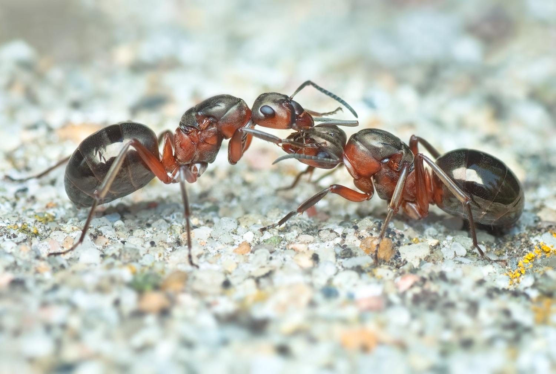6.Slider-ants1