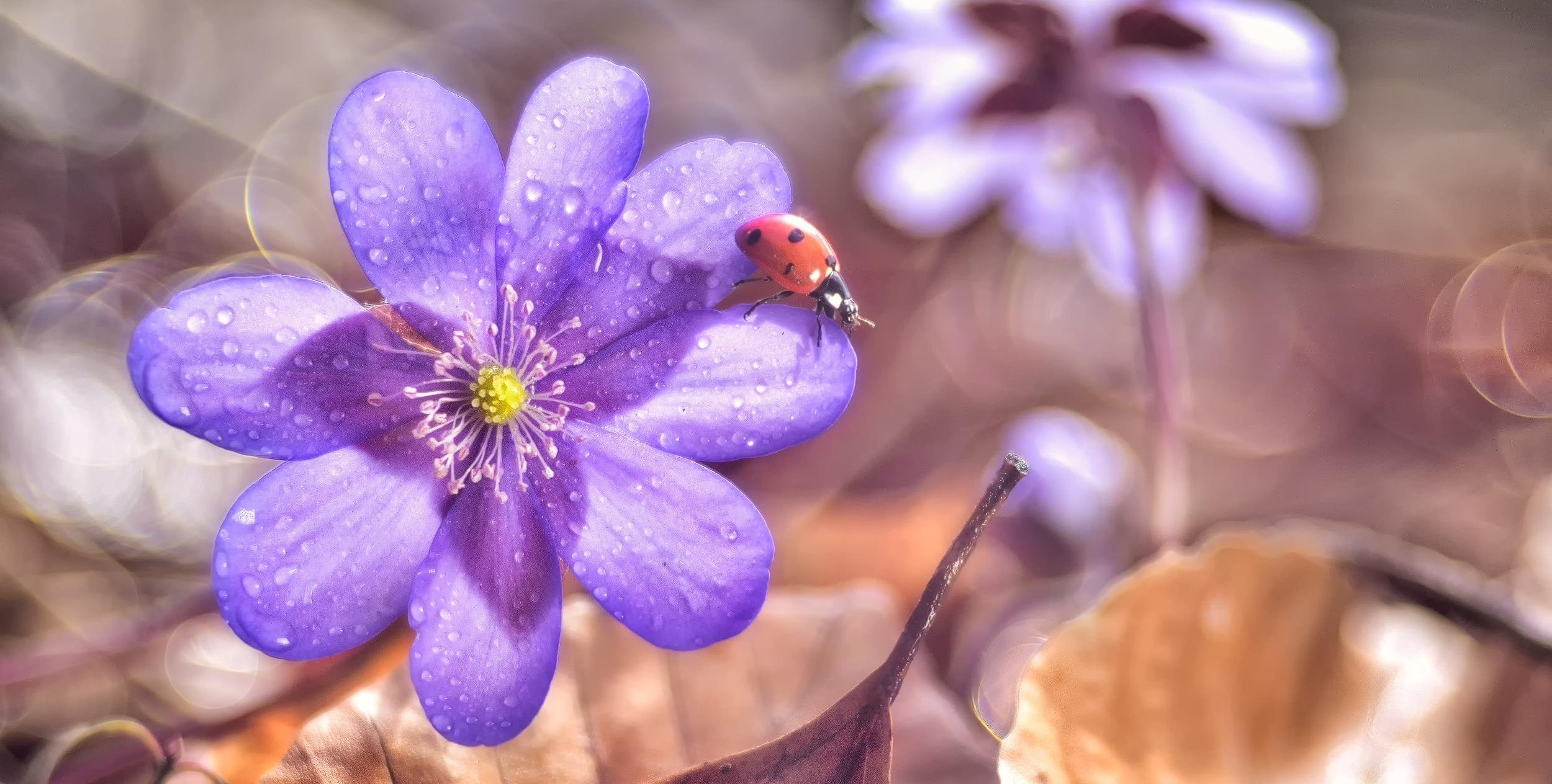Kopia-4.Slider-ladybug1